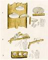 Bresadola - Pleurotus div.png