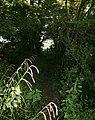 Bridleway - geograph.org.uk - 528096.jpg