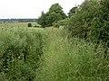 Bridleway and Oil-seed Rape - geograph.org.uk - 191971.jpg