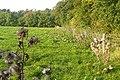 Bridleway at Down Wood - geograph.org.uk - 987059.jpg