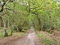 Bridleway descending into Dawkins Bottom, Roydon Woods - geograph.org.uk - 170444.jpg