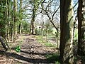 Bridleway through Reffolds Copse - geograph.org.uk - 147767.jpg