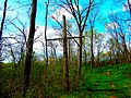 Broken Telegraph Pole - panoramio.jpg
