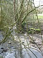 Brook through a tangle of branches - geograph.org.uk - 722496.jpg