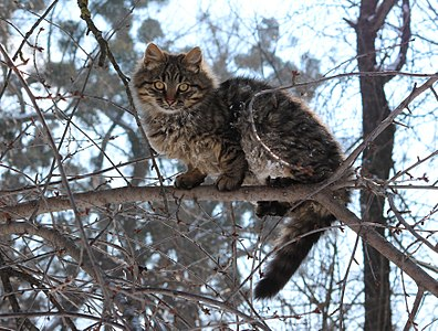 Brown tabby cat on tree
