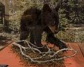 Bryce Canyon, Wikiexp 13.jpg