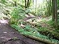 Bubovický potok, nad vodopády.jpg