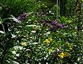 Buddleja lindleyana ^ Helianthus atrorubens - Flickr - peganum.jpg