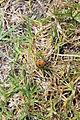 Bug (6271999320).jpg
