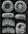 Bulletin of the British Museum (Natural History), Geology (1994) (20420202366).jpg