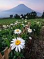 Bunga Posong.jpg