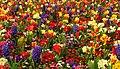 Burst of Spring colour - Flickr - natzweb.jpg