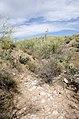 Butcher Jones Trail to Pinter's Point Loop, Tonto National Park, Saguaro Lake, Ft. McDowell, AZ - panoramio (136).jpg