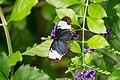 Butterfly (139037341).jpeg