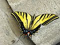 Butterfly in the garden of La Bombilla - Mexico DF - panoramio.jpg
