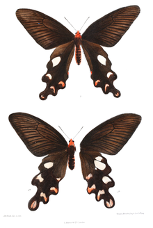 Male above and female below