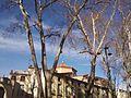 Céret - Platanes église hiver 1.jpg
