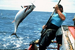 CSIRO ScienceImage 2323 Tagging Bluefin Tuna