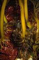 CSIRO ScienceImage 911 Undaria pinnatifida Japanese kelp.jpg