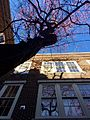 Cambell Hall courtyard tree.jpg