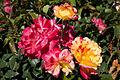 Camille Pissaro Blooms (4492474161).jpg