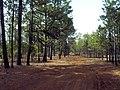 Camino en el bosque del silencio - panoramio.jpg