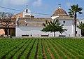 Camp de xufa i l'ermita de Vera, València.JPG