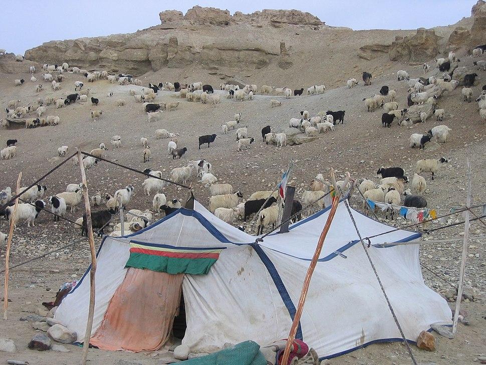 Campement de nomades Tibétains - Ngari