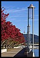 Canberra Autumn Leaves-3 (5862407191).jpg