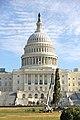 Capitol Christmas Tree 2013 (11052304215).jpg