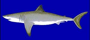 Tubar�o-branco, de perfil