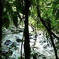 Cascade aux écrevisses, Guadeloupe, France - Flickr - pom'..jpg