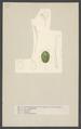 Cassida - Print - Iconographia Zoologica - Special Collections University of Amsterdam - UBAINV0274 001 11 0027.tif