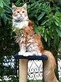 Cat Sueno Garden.jpg