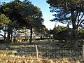 Catchwater Plantation, Wolsingham Park Moor - geograph.org.uk - 297829.jpg