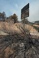 Cedar Fire - Heat Damaged Roadsign.jpg