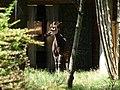Chester Zoo (22076327432).jpg
