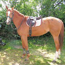 Silla de montar wikipedia la enciclopedia libre - Silla montar caballo ...