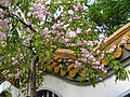 China garden in blossom, Saint Petersburg, Russia 01.jpg