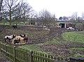 Christmas dinner for the horses, Delf Hill - geograph.org.uk - 298394.jpg
