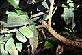 Cinnamomum verum 1zz.jpg