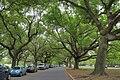 City Park - panoramio (5).jpg