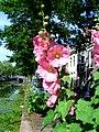 City flowers.jpg