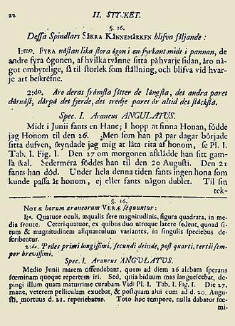 Svenska Spindlar - Description of A. angulatus (page 22)