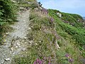 Cliff path with heather near Port a Dorais - geograph.org.uk - 910148.jpg