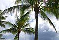 Clouds & palms.jpg