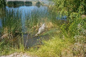 Mosca, Colorado - Image: Co mosca gator farm 2