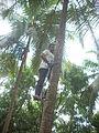 Coconut tree climbing DSCN0229.jpg