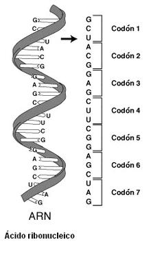 Código genético - Wikipedia, la enciclopedia libre
