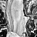 Columbia Glacier, Calving Terminus, Terentiev Lake, June 26, 1989 (GLACIERS 1444).jpg